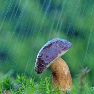 seta bosque lloviendo